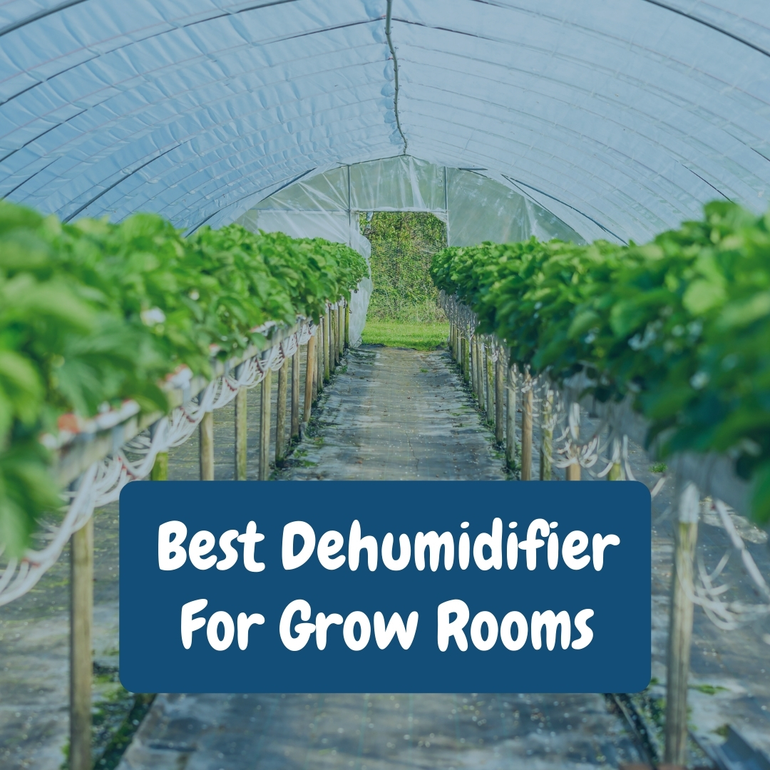 Best Dehumidifier For Grow Rooms